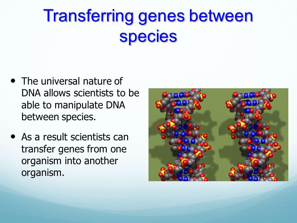 Transferring genes between species