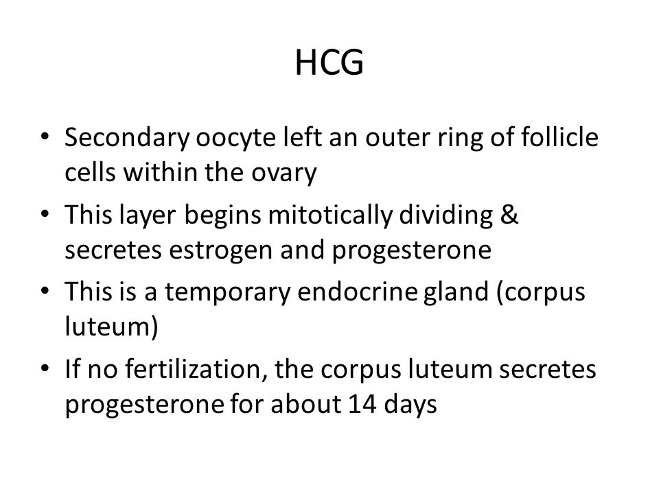 HCG Secondary oocyte left an outer ring of follicle cells within the ovary.
