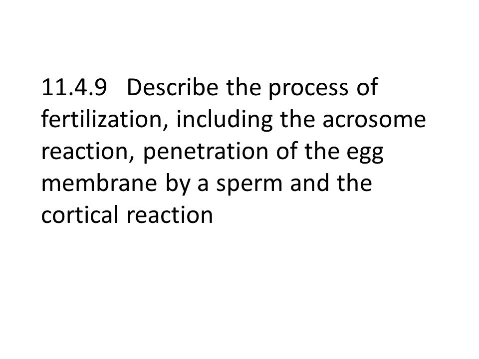 11.4.9 Describe the process of fertilization, including the acrosome reaction, penetration of the egg membrane by a sperm and the cortical reaction