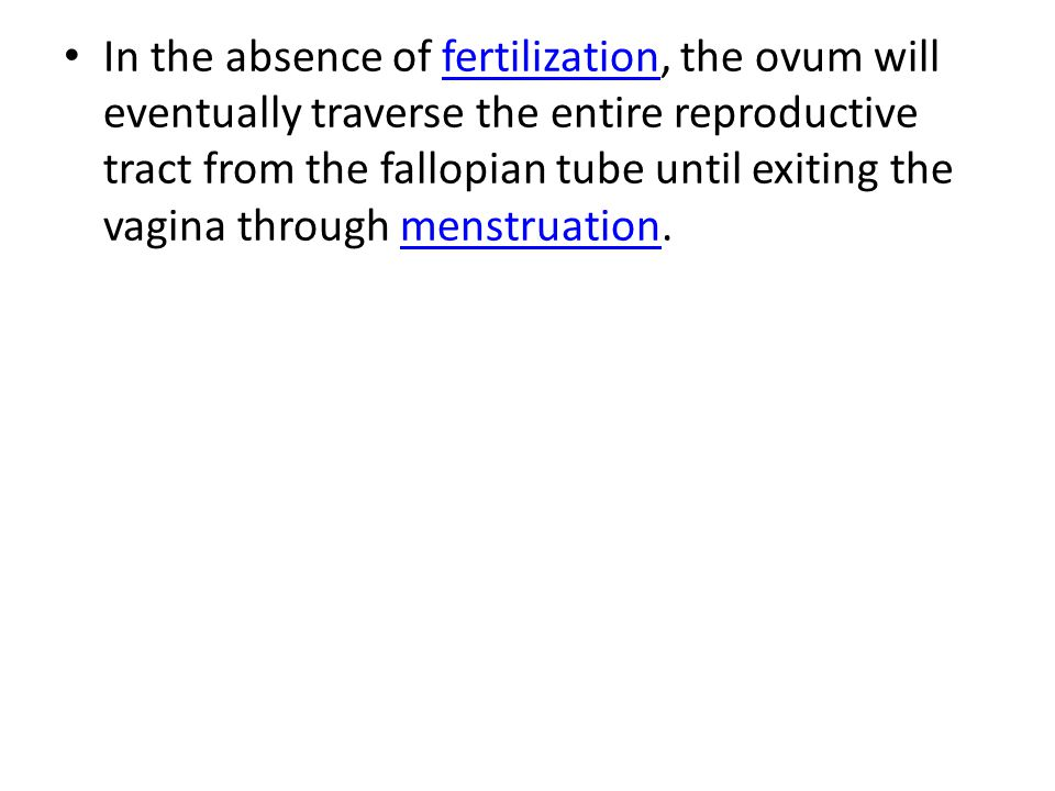 In the absence of fertilization, the ovum will eventually traverse the entire reproductive tract from the fallopian tube until exiting the vagina through menstruation.