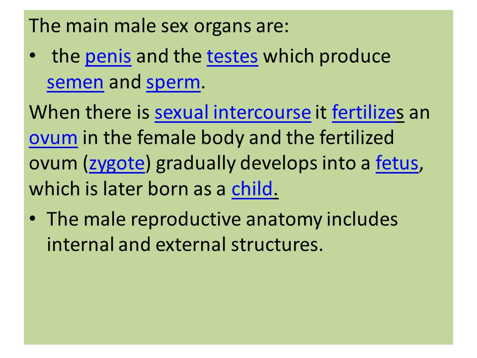 The main male sex organs are: