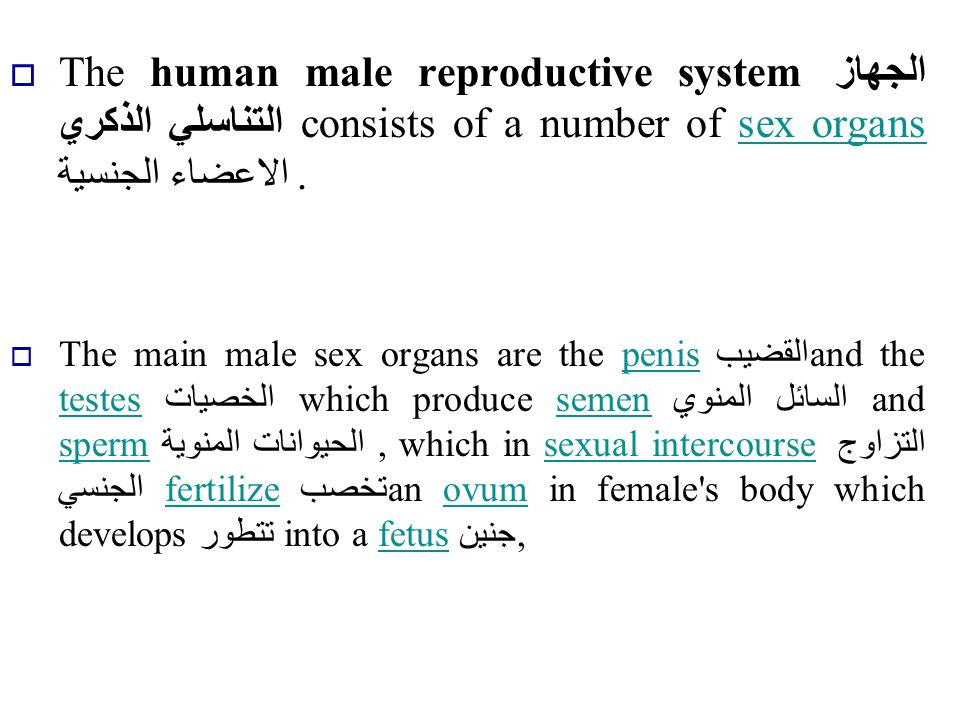 The human male reproductive system الجهاز التناسلي الذكري consists of a number of sex organs الاعضاء الجنسية .