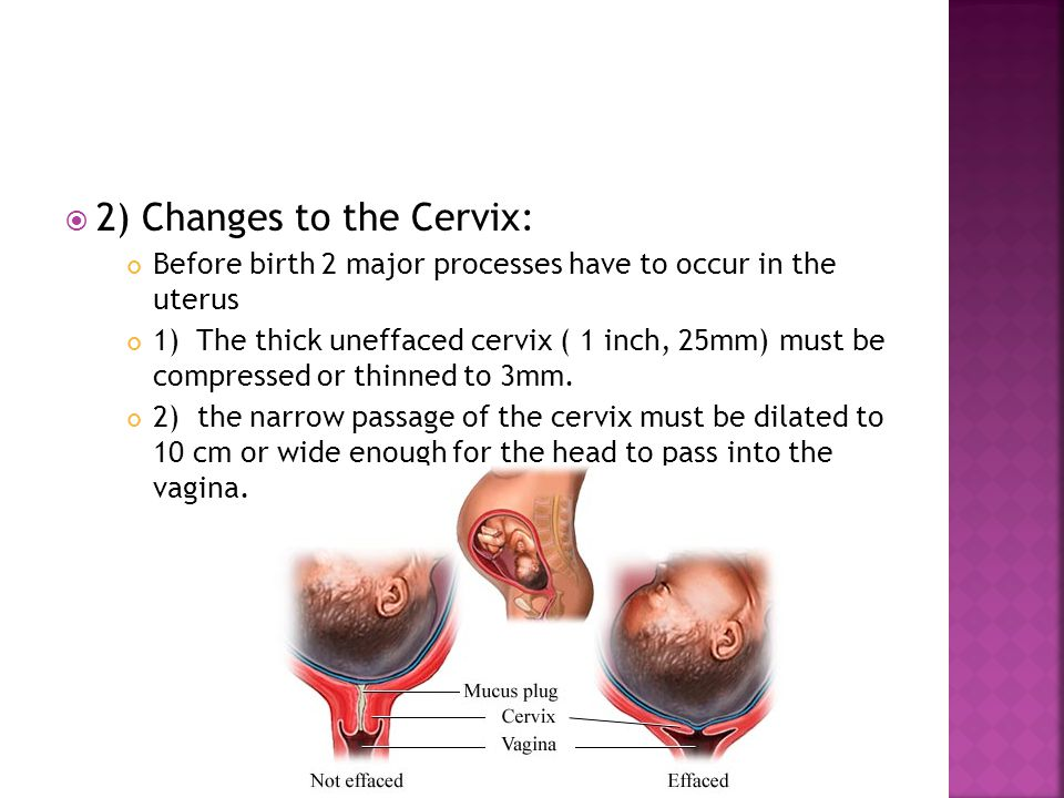 2) Changes to the Cervix: