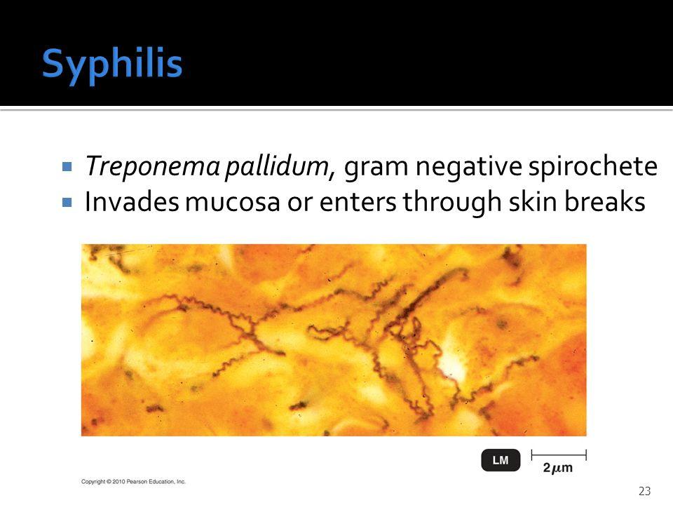 Syphilis Treponema pallidum, gram negative spirochete