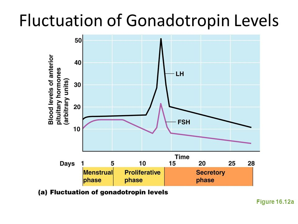 Fluctuation of Gonadotropin Levels