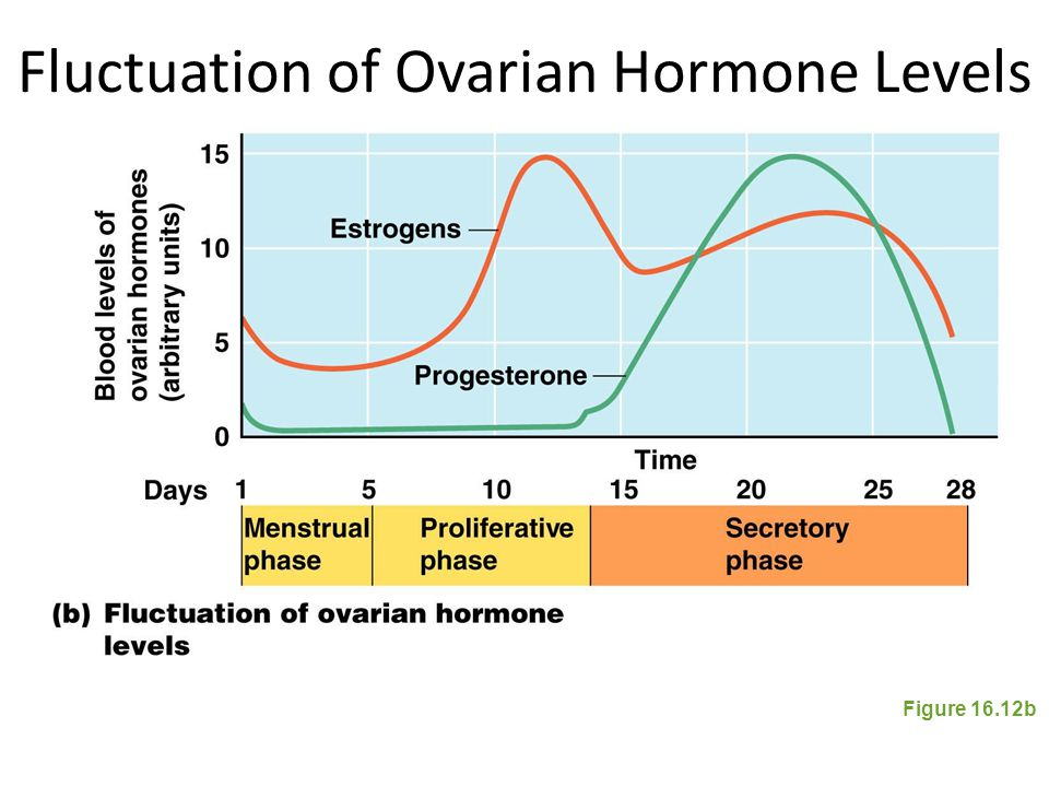 Fluctuation of Ovarian Hormone Levels