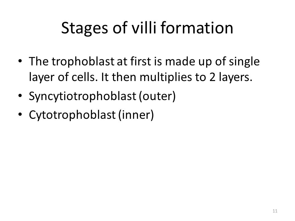 Stages of villi formation