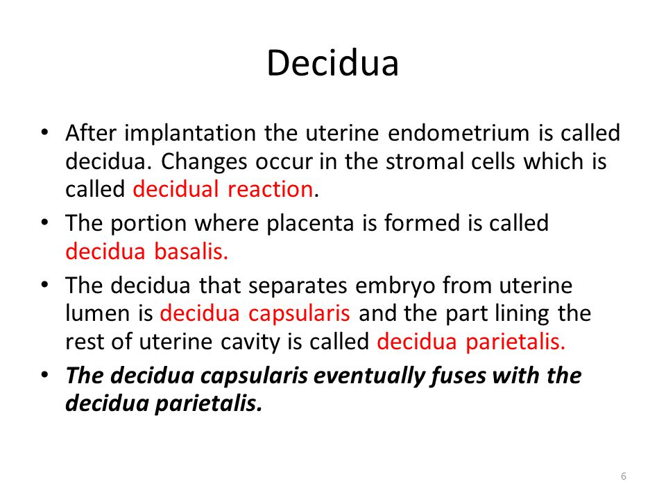 Decidua After implantation the uterine endometrium is called decidua. Changes occur in the stromal cells which is called decidual reaction.