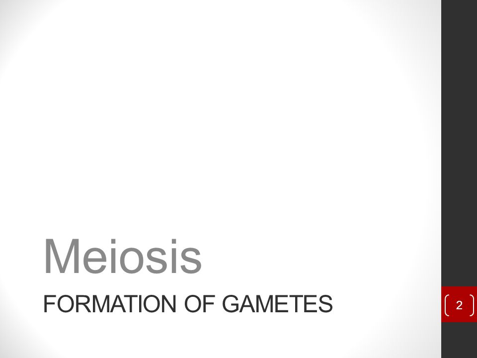 Meiosis Formation of Gametes