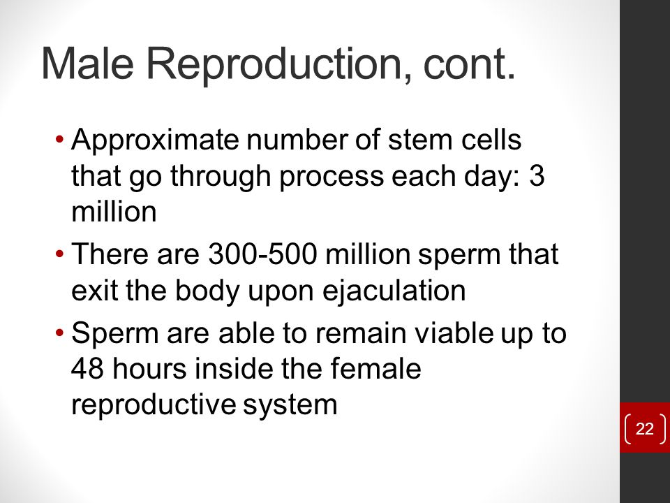Male Reproduction, cont.