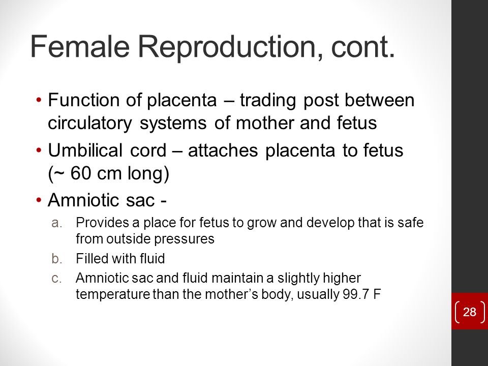 Female Reproduction, cont.