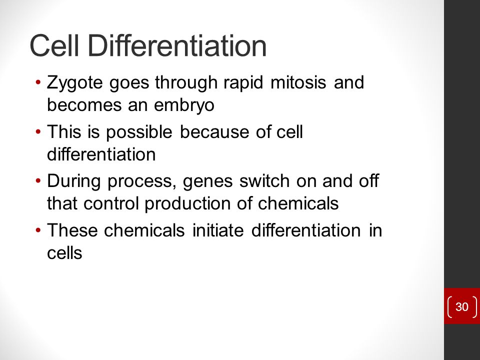 Cell Differentiation Zygote goes through rapid mitosis and becomes an embryo. This is possible because of cell differentiation.