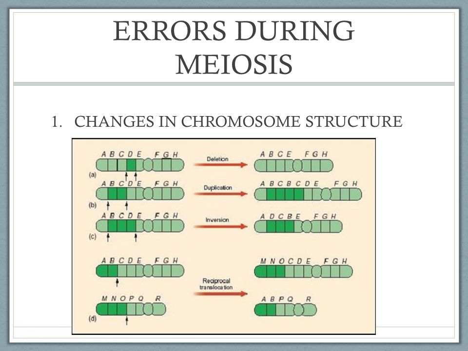 ERRORS DURING MEIOSIS CHANGES IN CHROMOSOME STRUCTURE