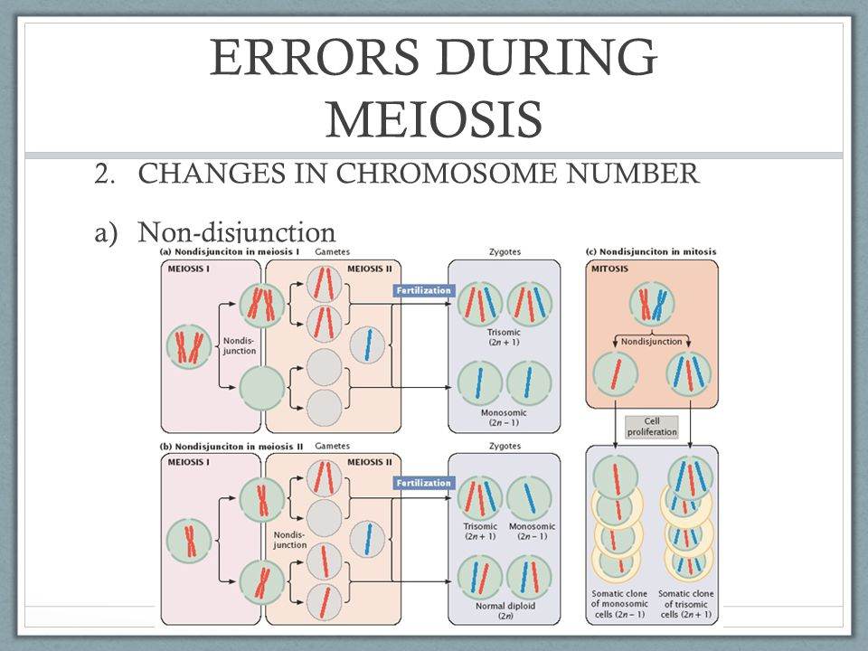 ERRORS DURING MEIOSIS CHANGES IN CHROMOSOME NUMBER Non-disjunction