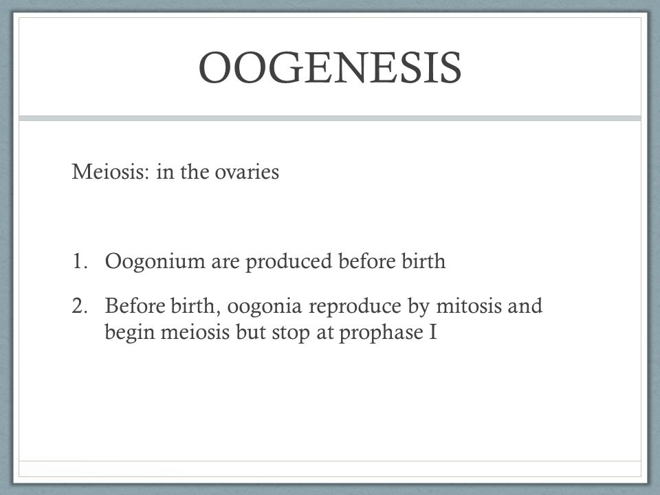 OOGENESIS Meiosis: in the ovaries Oogonium are produced before birth