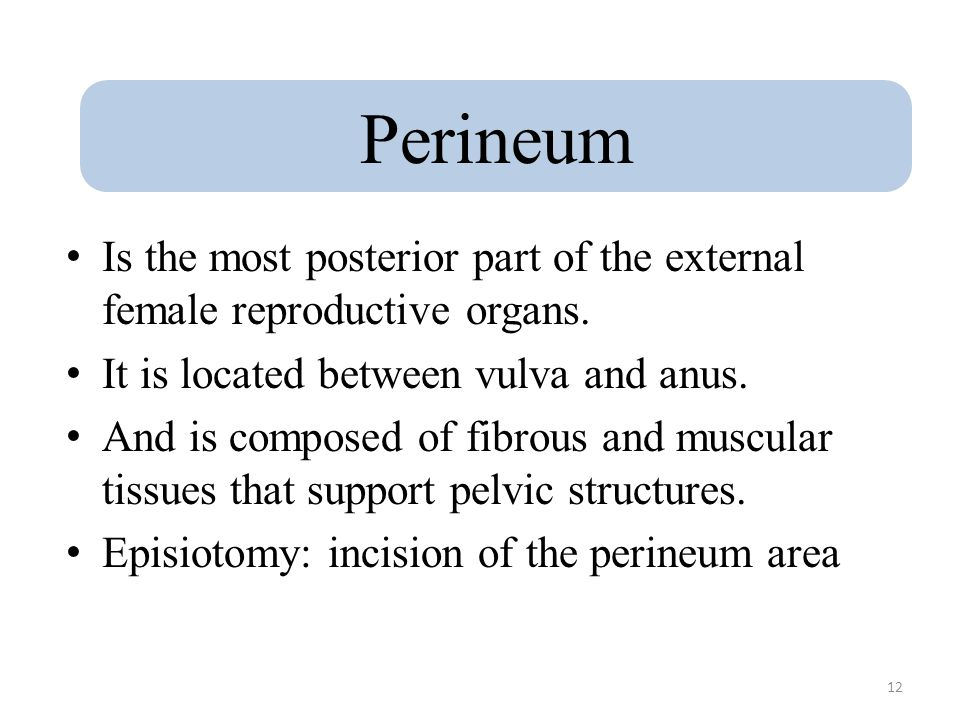 Perineum Is the most posterior part of the external female reproductive organs. It is located between vulva and anus.