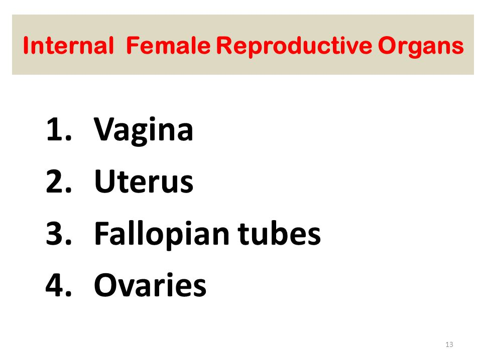 Internal Female Reproductive Organs