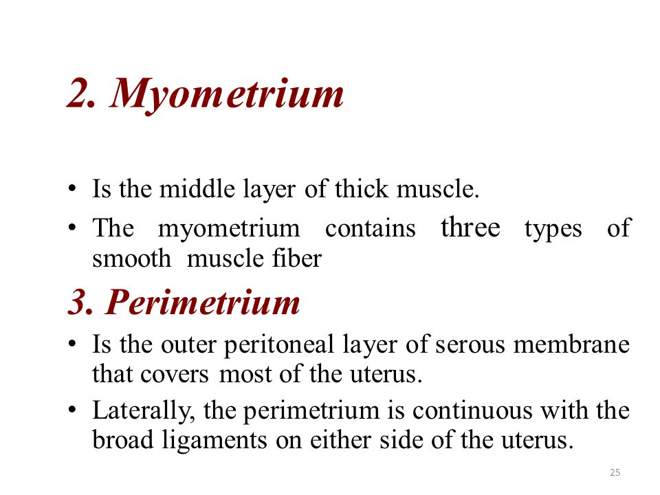 2. Myometrium 3. Perimetrium Is the middle layer of thick muscle.