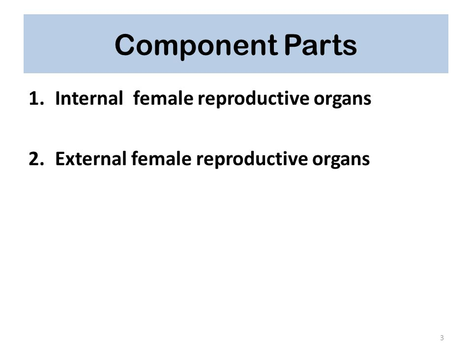 Component Parts Internal female reproductive organs