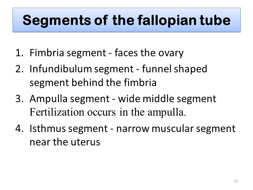 Segments of the fallopian tube