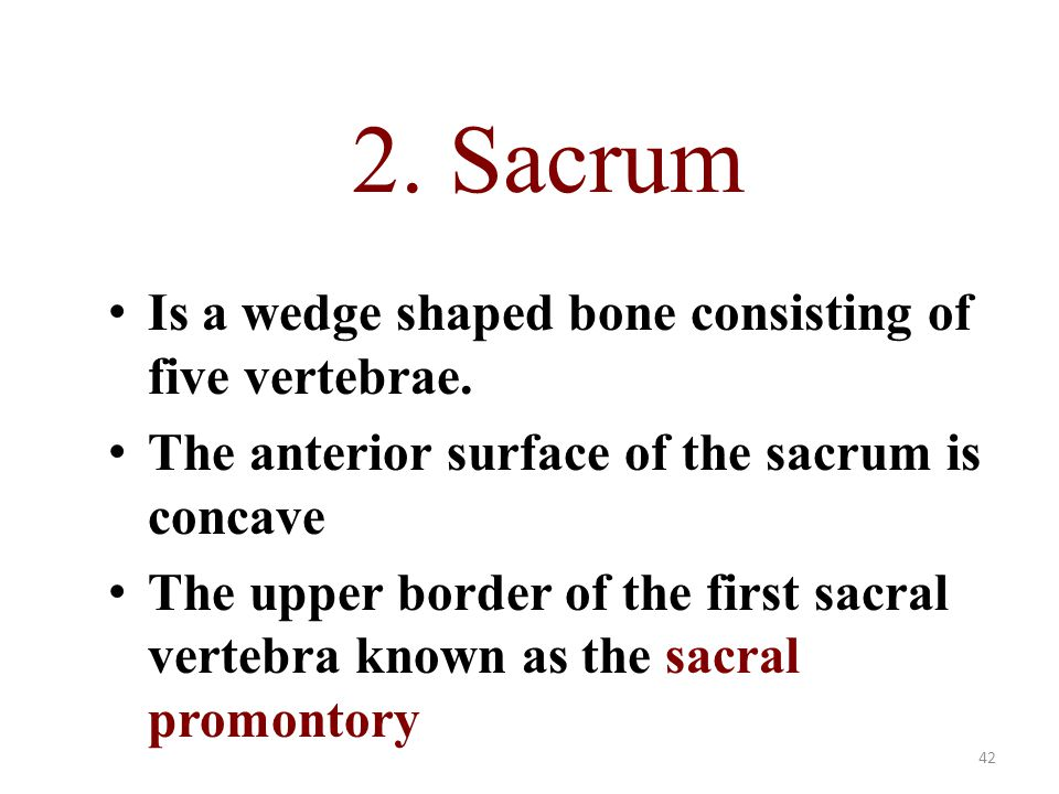 2. Sacrum Is a wedge shaped bone consisting of five vertebrae.