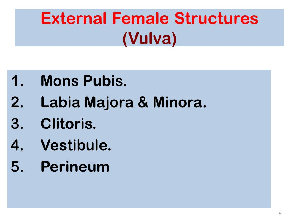 External Female Structures (Vulva)