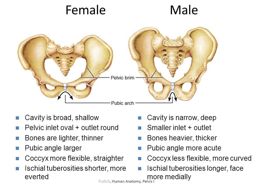Frolich, Human Anatomy, Pelvis I