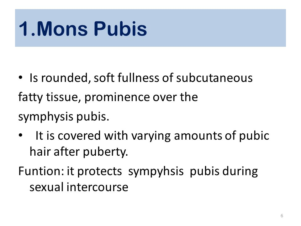 1.Mons Pubis Is rounded, soft fullness of subcutaneous