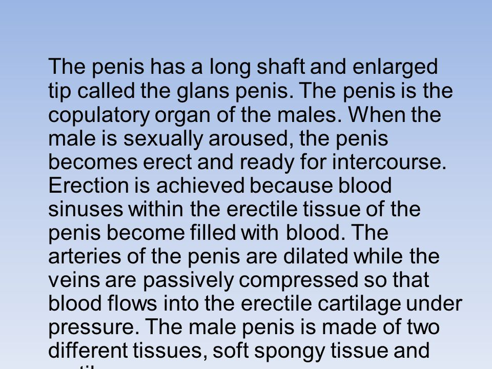 The penis has a long shaft and enlarged tip called the glans penis