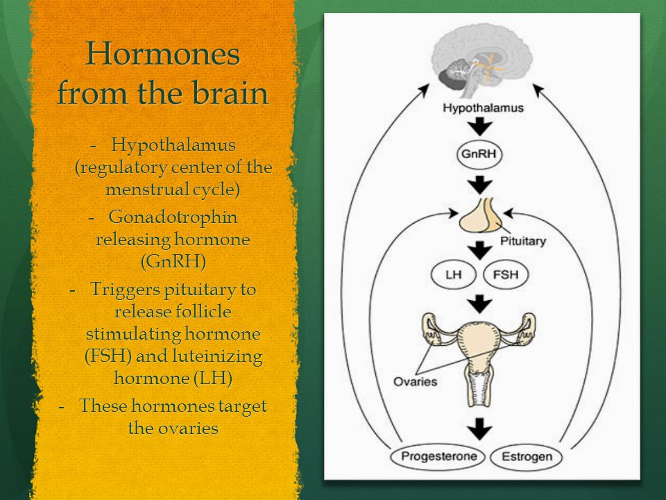 Hormones from the brain