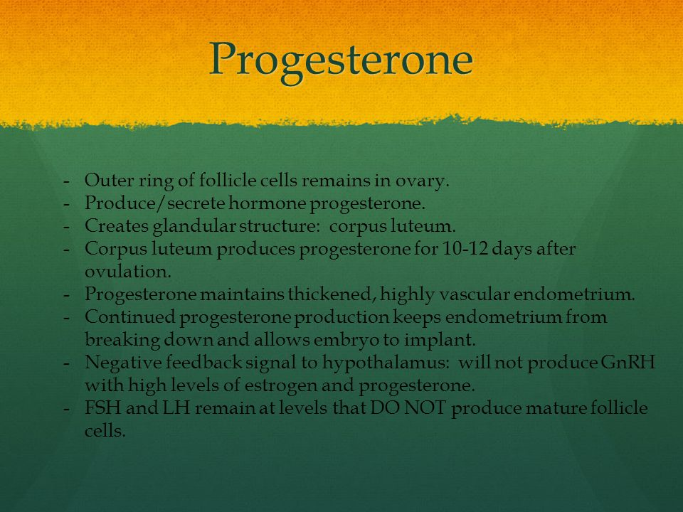 Progesterone Outer ring of follicle cells remains in ovary.