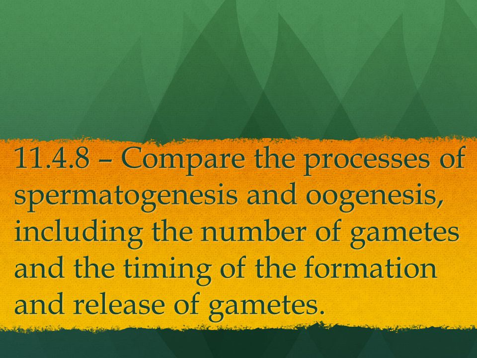 11.4.8 – Compare the processes of spermatogenesis and oogenesis, including the number of gametes and the timing of the formation and release of gametes.