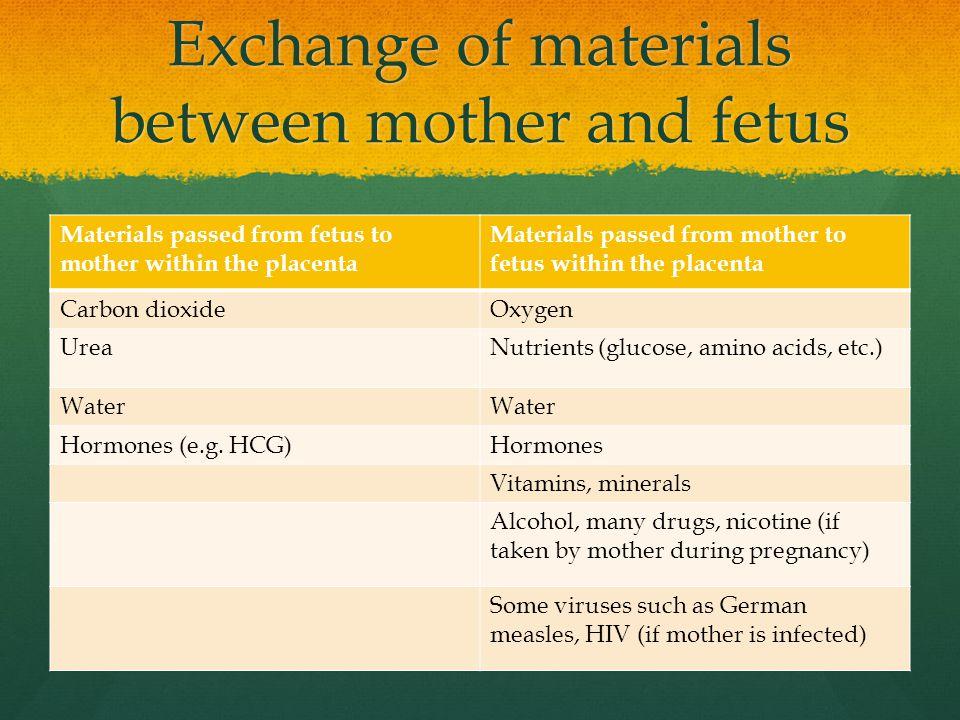 Exchange of materials between mother and fetus