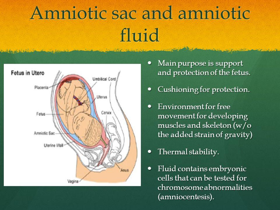 Amniotic sac and amniotic fluid