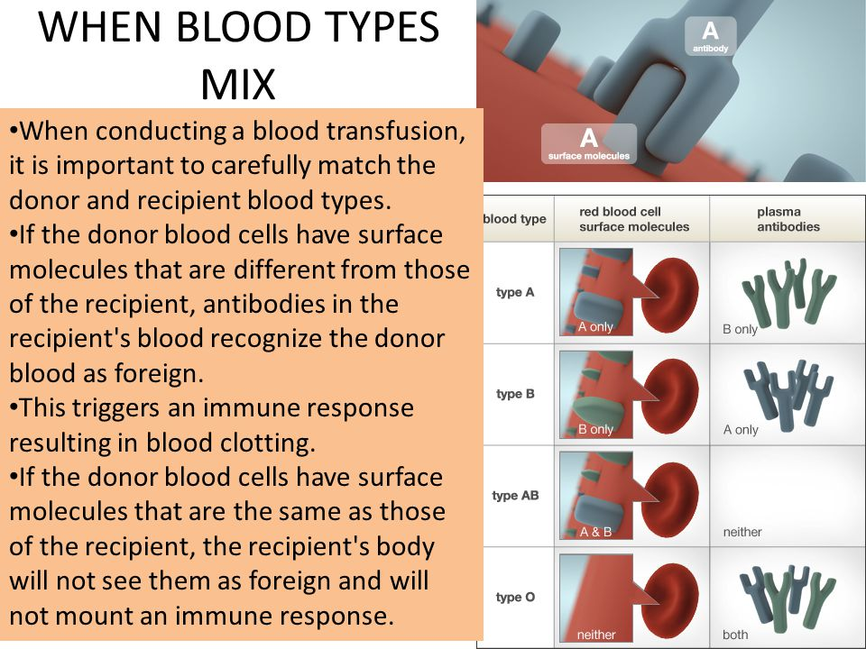 WHEN BLOOD TYPES MIX When conducting a blood transfusion, it is important to carefully match the donor and recipient blood types.