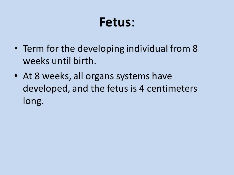 Fetus: Term for the developing individual from 8 weeks until birth.