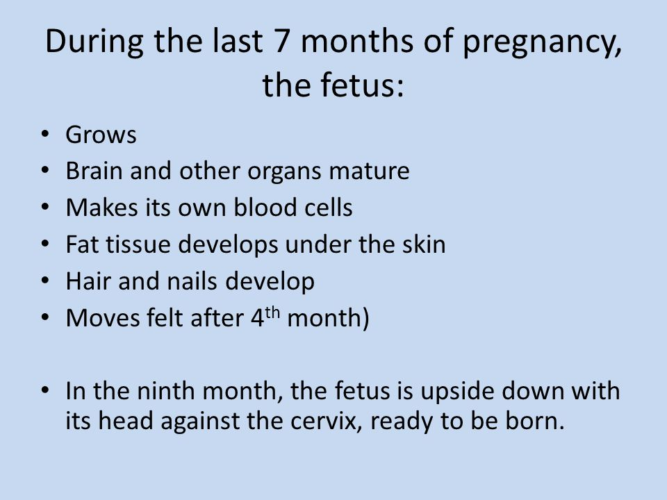During the last 7 months of pregnancy, the fetus: