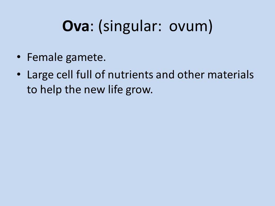 Ova: (singular: ovum) Female gamete.