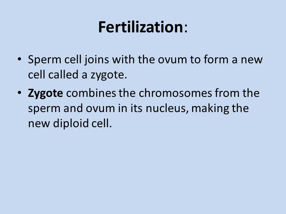 Fertilization: Sperm cell joins with the ovum to form a new cell called a zygote.
