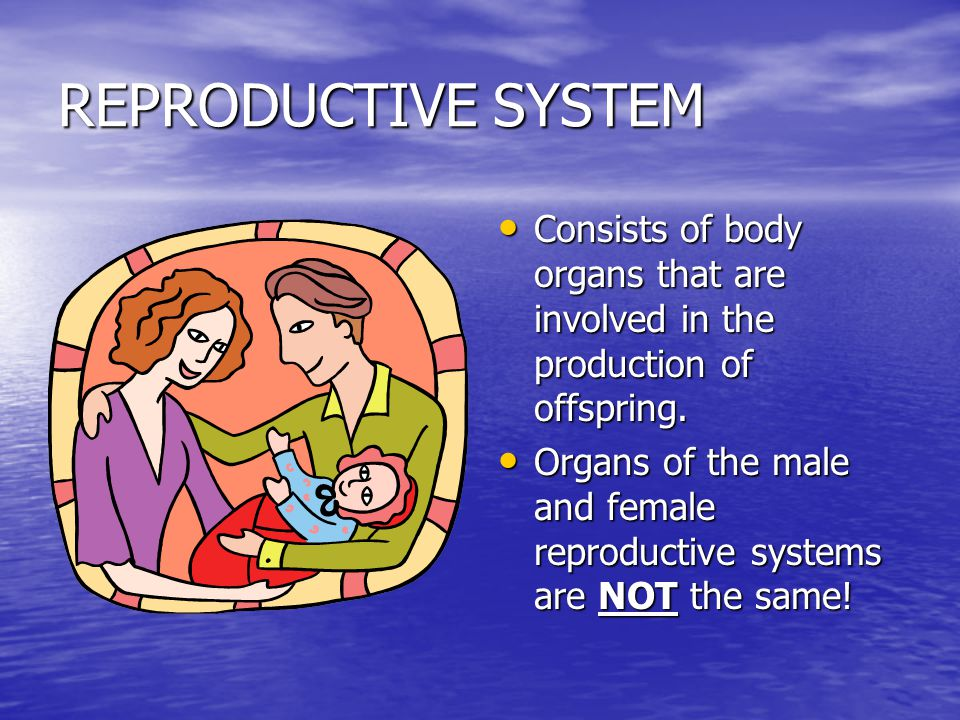 REPRODUCTIVE SYSTEM Consists of body organs that are involved in the production of offspring.