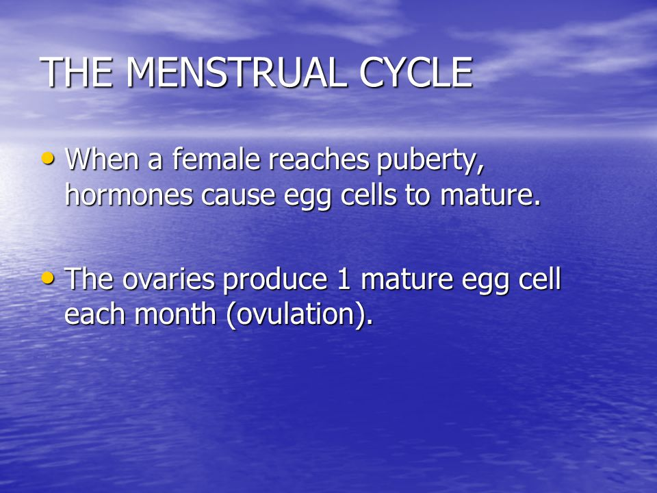 THE MENSTRUAL CYCLE When a female reaches puberty, hormones cause egg cells to mature.