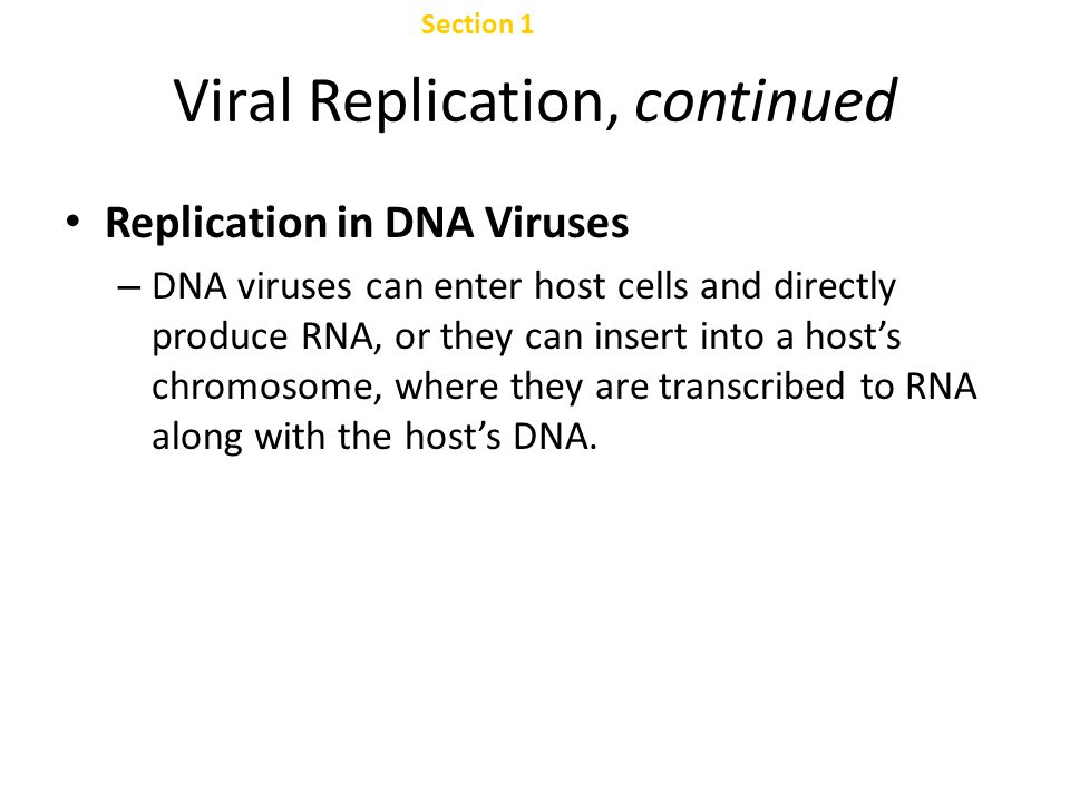 Viral Replication, continued