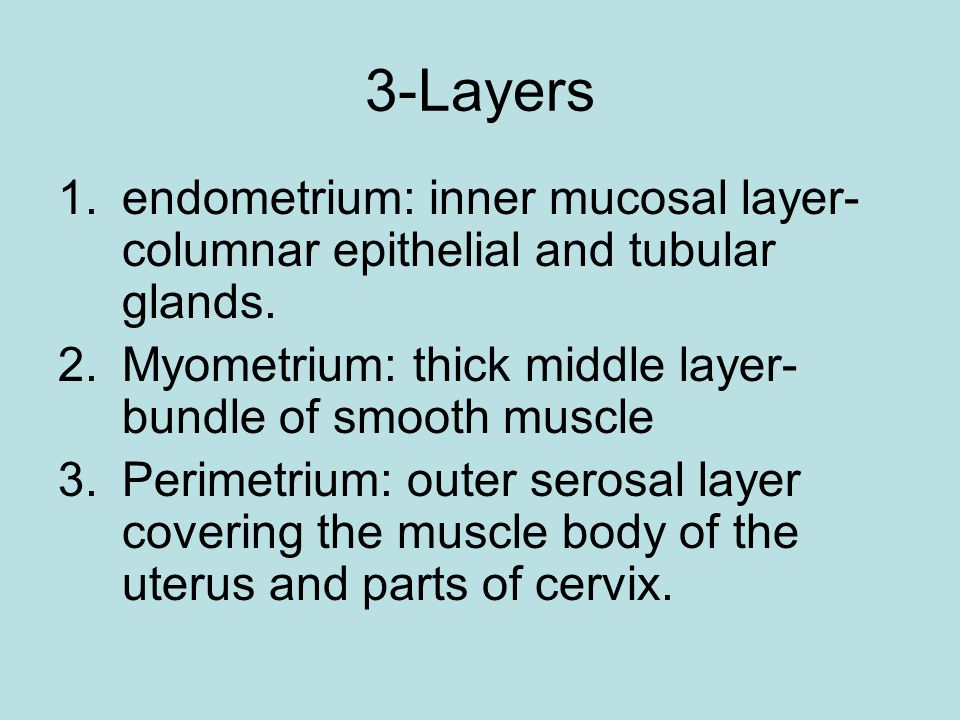3-Layers endometrium: inner mucosal layer-columnar epithelial and tubular glands. Myometrium: thick middle layer-bundle of smooth muscle.