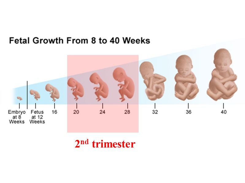 2nd trimester