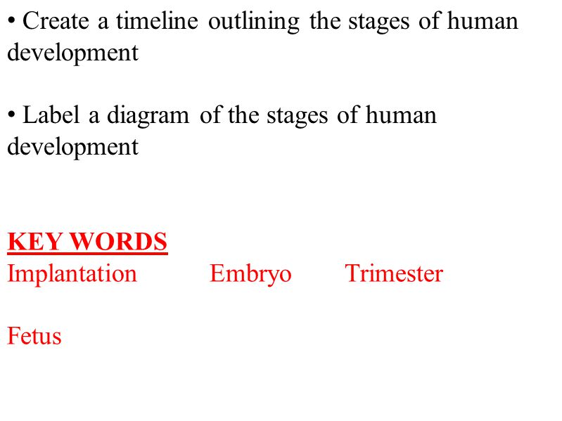 Create a timeline outlining the stages of human development