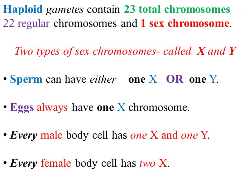 Two types of sex chromosomes- called X and Y