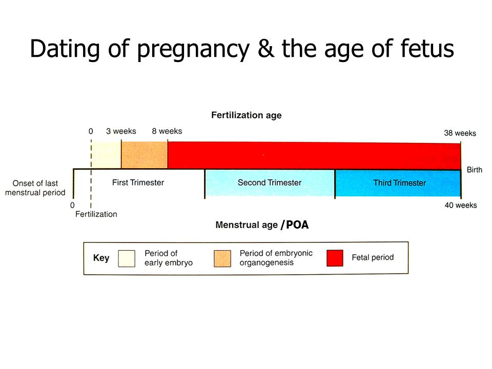 Dating of pregnancy & the age of fetus