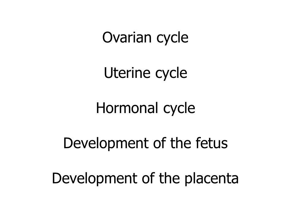 Development of the fetus Development of the placenta