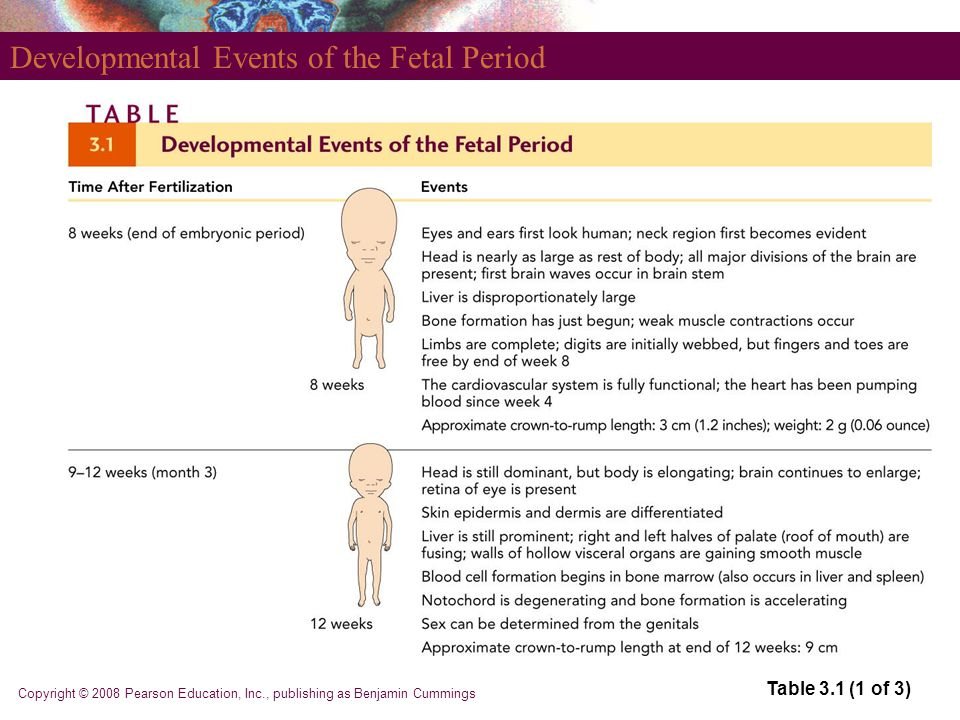 Developmental Events of the Fetal Period