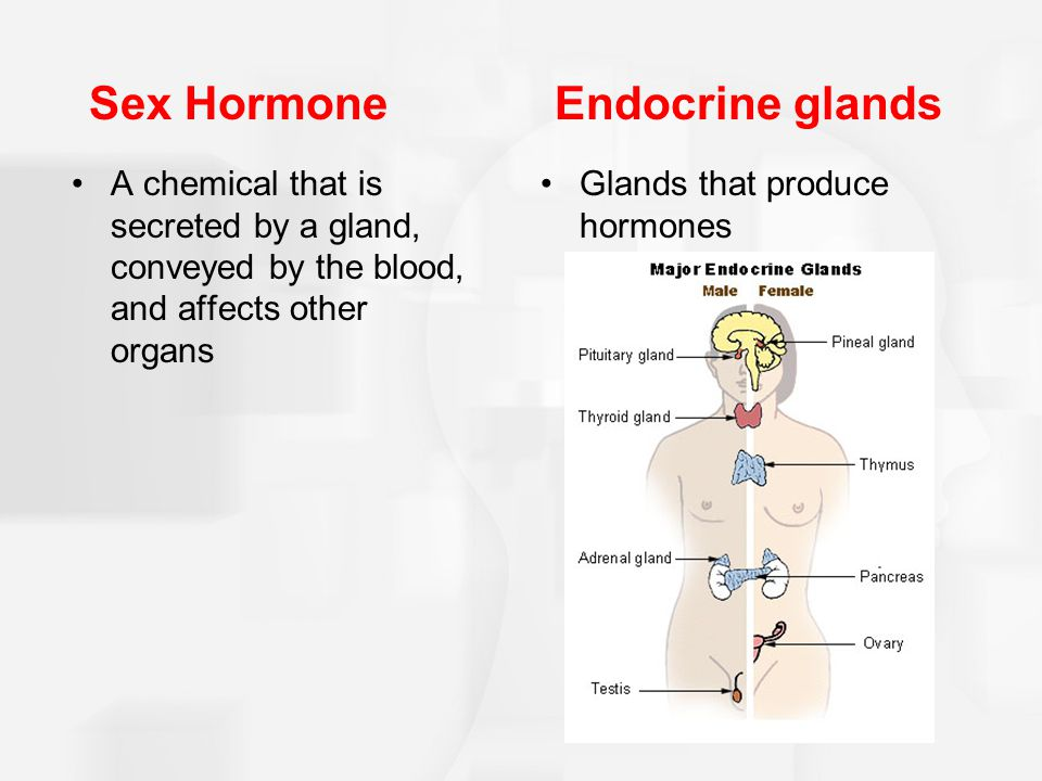 Sex Hormone Endocrine glands
